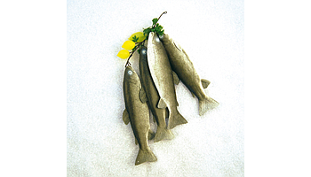 Garlands and decorative fish products